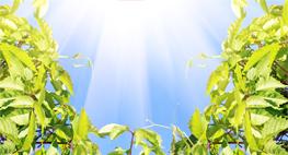 vitamin D and sunlight